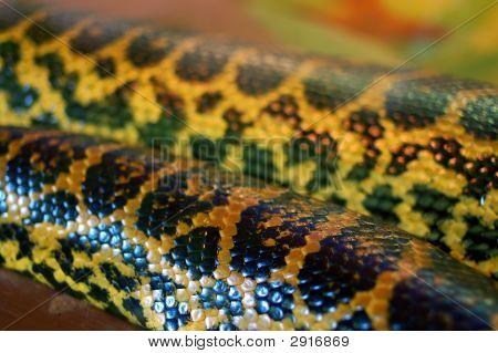 Anakonda Pattern