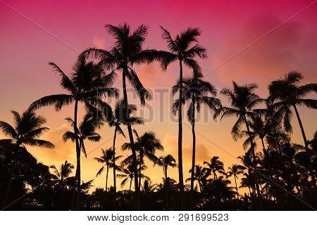 Palm Trees Silhouette On Sunset Tropical Beach On Hawaii, Usa