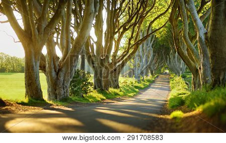 The Dark Hedges, An Avenue Of Beech Trees Along Bregagh Road In County Antrim. Atmospheric Tree Tunn