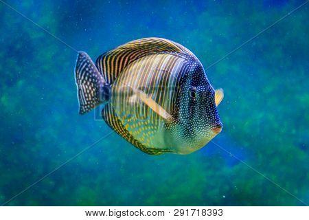 poster of Fish in a large zoo aquarium. Underwater wildlife. Beautiful fish