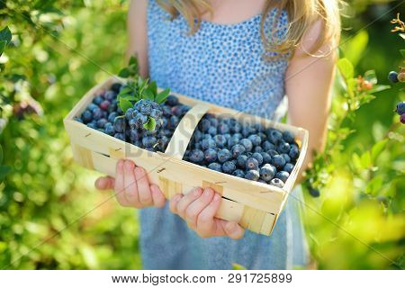 Cute Little Girl Picking Fresh Berries On Organic Blueberry Farm On Warm And Sunny Summer Day. Fresh