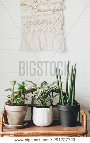 Stylish Green Plants In Pots On Wooden Vintage Stand On Background Of White Rustic Wall With Embroid