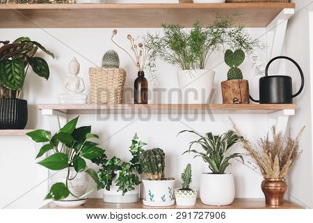 Stylish Wooden Shelves With Green Plants And Black Watering Can. Modern Hipster Room Decor. Cactus,