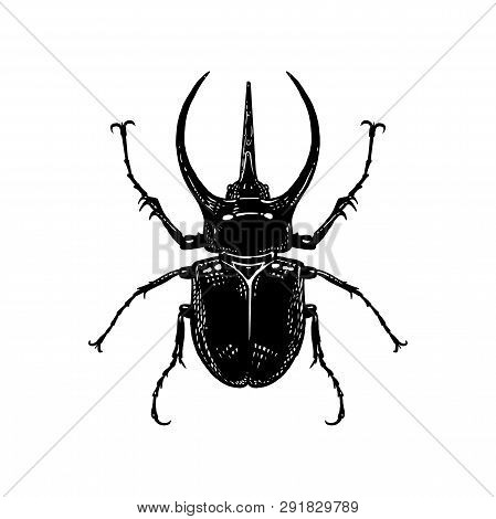 Black And White Sketch. Insect Beetle Isolated On White Background. Realistic Drawing Bug. Vector Il