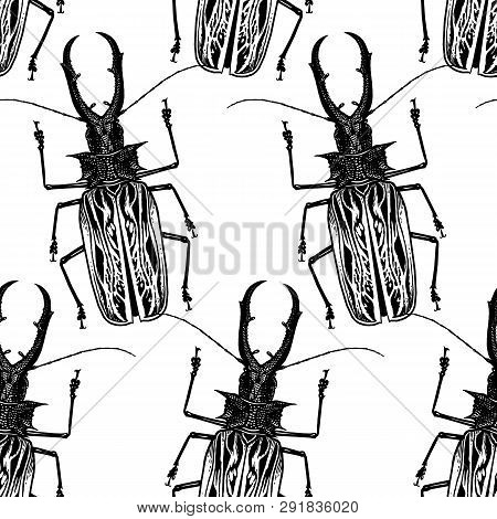 Insect Beetle Isolated On White Background. Seamless Pattern. Black And White Sketch. Realistic Draw
