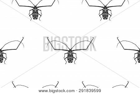 Insect Beetle Harlequin Isolated On White Background. Seamless Pattern. Black And White Sketch. Real