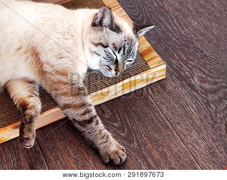 Beige Cat Sleeping On A Cardboard Scratcher.  Cat Chilling Out