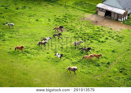 Various Wild Horses Running On A Green Field Close To A Rural Farm