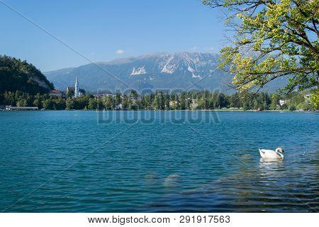 Lake Bled Slovenia. Beautiful Mountain Lake With Small Pilgrimage Church. Most Famous Slovenian Lake