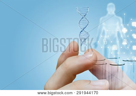 The Closeup Of Male Fingers Holding A Dna Model And Laboratory Tubes With Human Figure Image And Med