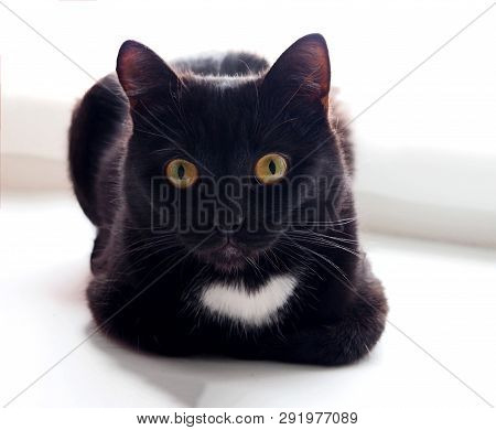 Black Cat With A Heart Shape Spot Chilling Out On A White Window