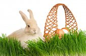 Adorable rabbit and basket with eggs in green grass on white background poster