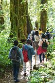 Travelers traveling on footpath in rainforest, ecotourism in beautiful nature environment in trail on mountain, travelers traveling on trail on mountain, tourist tour in ecotourism, trekking tourist poster