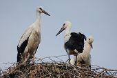 Stork on the nest.Kiev,Ukraine poster