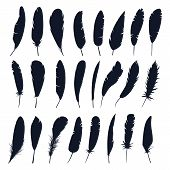 Set of isolated bird feather or plume silhouette. Black quill for decoration or writing. Hand drawn wing plumage, angel or dove, swan fluff closeup. Naturale fluffy sign, fuzz contour, Fly animal poster