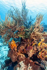 Coral Reef Underwater Off The Coast Of The Islansd Of Bonaire