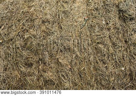 Messy Old Grass Hay Stack Texture Topview