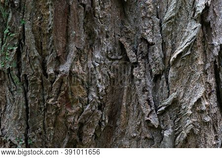 Rough Grunge Dark Tree Bark Texture With Crevices