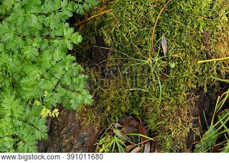 Green Plant Leaves Covering Wood Tree Trunk Covered In Green Moss Plants
