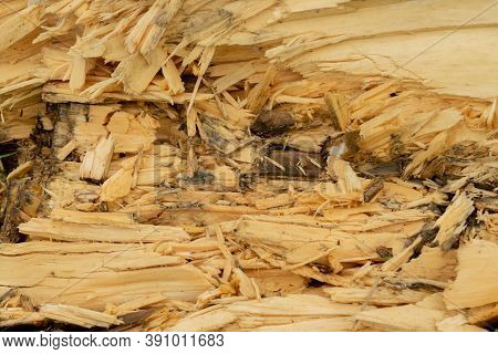 Broken Decaying And Rotting Wet Wood Log Texture