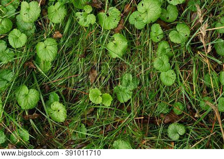 Bright Green Small Leaves And Grass Texture Top View Perspective
