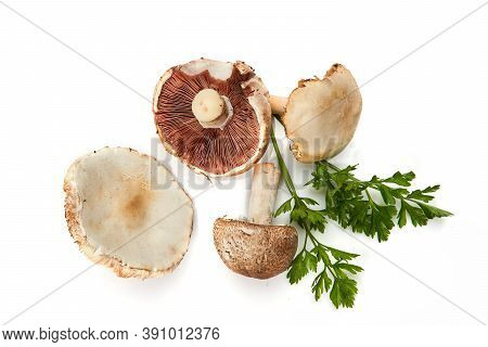Wild Foraged Mushroom And Parsley Isolated On White Background, With Shadow.