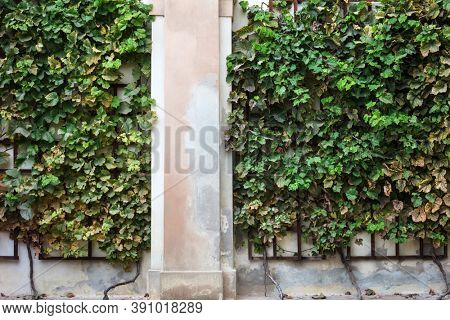 hedge of plants on the wall of the house