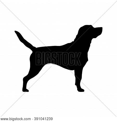 Black Dog Breed Labrador Retriever White Background. Puppy Breed Labrador Vector Isolated Black Silh