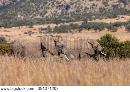 Family Of African Elephant In Pilanesberg Game Reserve. South Africa Wildlife Safari.