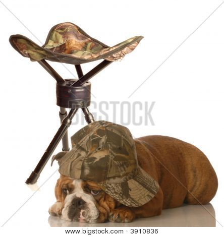 english bulldog wearing camo hat laying beside hunting stool poster