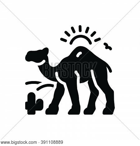 Black Solid Icon For Camel-in-desert-with-sun Camel Desert Dune Landscape Natural Journey Sand Cactu