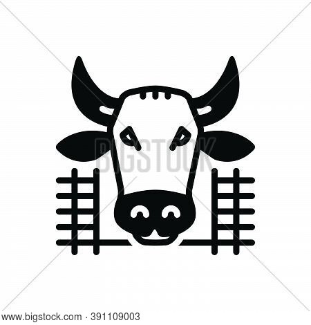 Black Solid Icon For Cow-in-shed Cow Shed Farmyard Cattle Pet Breed Agriculture Pavilion Beef Animal