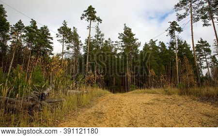Sand Road In The Autumn Pine Forest