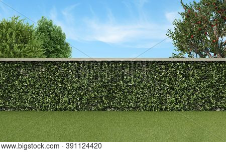 Garden With Climbing Plants On A Stone Wall, Grass And Trees - 3d Rendering