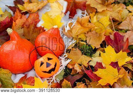 Happy Halloween!autumn Harvest Of Vegetables.orange Red Pumpkins Lie In The Garden On The Grass In Y