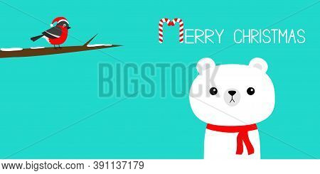 Merry Christmas. Candy Cane. White Polar Bear In Red Scarf. Bulfinch Bird On Tree Brunch. Hello Wint