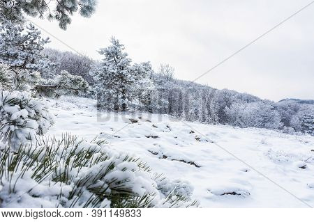 Fluffy Winter Pine Forest In The Fog. Beautiful Fairytale Winter On Ai-petri Crimea. Light Snowfall