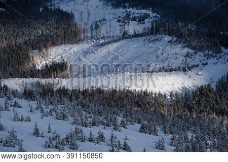 Snow Covered Fir Trees On Snowy Mountain Slope In Last Evening Sunset Sun Light. Magnificent Dusk On