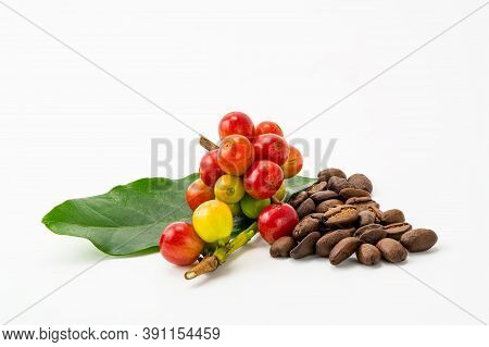 Bunch Of Arabica Coffee Fruit With Green Leaf And Pile Of Roasted Coffee Beans On White Background W