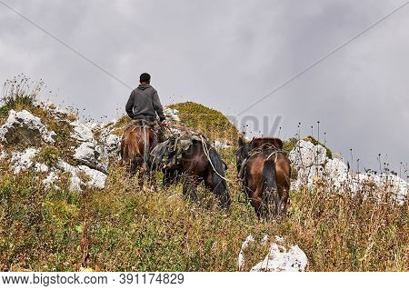 Rider Climbs The Mountain Along The Slope Overgrown With Autumn Grass, Leading Two More Horses In Ad