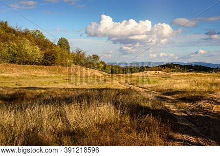 Meadow In Autumn Nature Landscape. Meadow Grass Landscape. Summer In Mountain Meadow Landscape. Tree