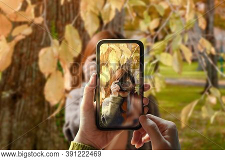 Taking Photo Via Smartphone. Young Person Using Mobile Phone To Taking A Photograph For Friend In Ou