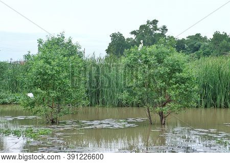 A View Of Tropical Water Plant Growing In A River Side Area With Weed Field And Blurred A Water Bird