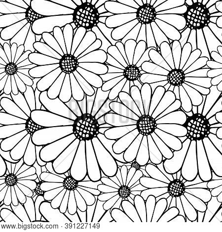 Outline Daisy On White Seamless Background. Botanical Endless Pattern For Fabric Print, For Wallpape