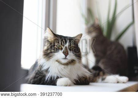 Nice Cat Laying On The Window Sill