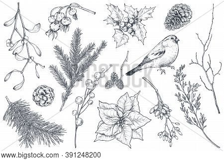 Collection Of Natural Christmas Objects - Plants, Bird, Flowers, Spruce Branch.