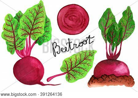 Watercolor Beetroot Set Isolated On White Background. Whole Beetroot, Halm, Garden Bed And Slice Ill