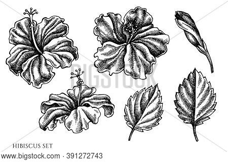 Vector Set Of Hand Drawn Black And White Hibiscus Stock Illustration