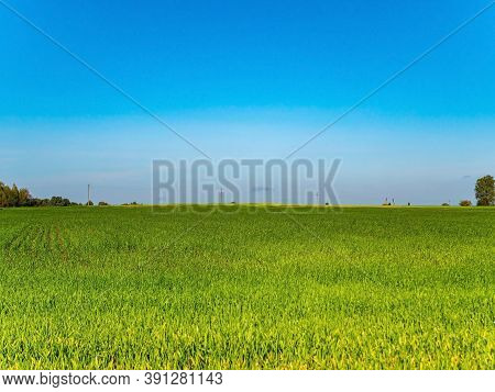 Green Agricultural Field Of Winter Crops Against The Blue Sky. Farm Field Of Winter Crops. Agricultu