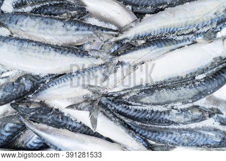 Frozen Mackerel Background. Frozen Group Of Fish. Iced Fish. Heap Of Mackerel. Mackerel Pattern. Mac